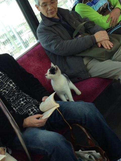 電車に乗ってきた猫