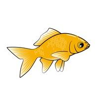 7年以上生き延びた奇跡の金魚